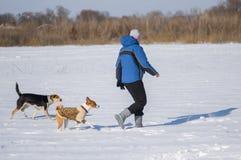 跑与在新鲜的雪的两条狗的妇女,当使用室外时 免版税库存图片