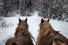 跑与在路的冬天雪橇的马 免版税库存图片