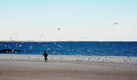 跑与海鸥 库存照片