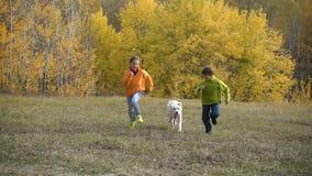 跑与金毛猎犬的两个孩子在领域 影视素材