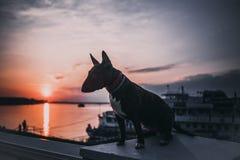 跑和使用反对日落的快活的狗 免版税库存照片