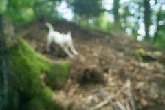 跑和使用在森林里的狗-迷离的 免版税库存图片