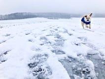 跑在一条多雪的冬天道路下的小狗 库存图片