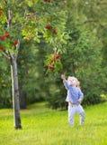 跑在一棵红色莓果树下的逗人喜爱的滑稽的女婴 免版税库存图片