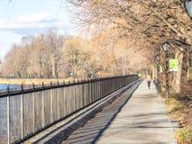 跑在中央公园 免版税库存图片