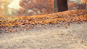 跑在公园在秋天 股票录像