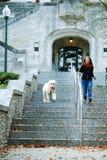跑在台阶下的一个十几岁的女孩和她的狗在印第安纳大学 免版税库存照片