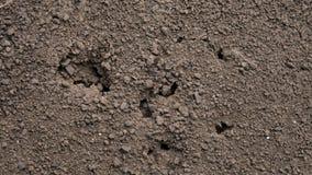 跑在地面、宏指令和特写镜头昆虫的近的孔附近的蚂蚁 股票视频