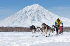 跑在堪察加火山背景的拉雪橇狗队  俄国 库存照片