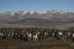 跑在山的鹿牧群  图库摄影
