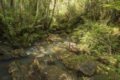 跑在岩石中的小河在一个密集的森林中间 免版税库存图片