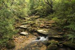 跑在岩石中的长的曝光小河在一个密集的森林中间 库存照片