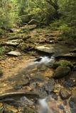 跑在岩石中的长的曝光小河在一个密集的森林中间 免版税库存照片