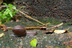 跑在岩石地板上的蜗牛 免版税图库摄影