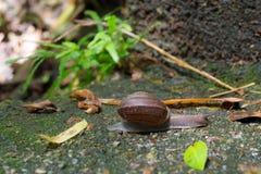 跑在岩石地板上的蜗牛 图库摄影