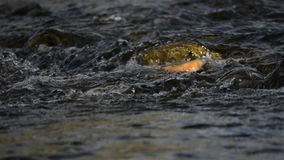 跑在岩石水的小河 股票录像