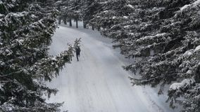 跑在斯诺伊冬天杉木森林里的男性运动员跑步户外 刺激 影视素材