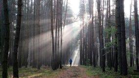 跑在日出的年轻人在有雾的森林 股票视频