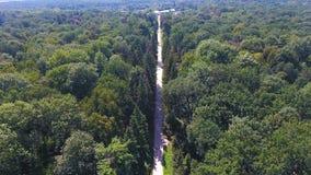 跑在极大的国家公园,保存圣所中部的长的路  影视素材
