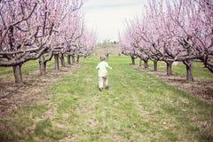 跑在桃子果树园的男孩 库存照片