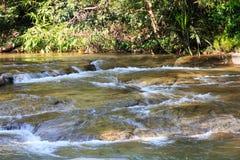 跑在森林和岩石里的淡水小河 图库摄影
