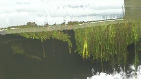 跑在测流堰下的水 可看见水下的植物 股票录像