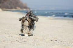 跑在海滩的愉快的狗 免版税图库摄影