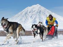 跑在火山背景的拉雪橇狗队  俄国杯拉雪橇狗赛跑雪学科,堪察加拉雪橇狗赛跑Berin 免版税库存照片