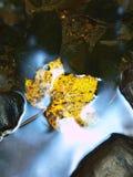 跑在石渣和石头的小河被弄脏的蓝色波浪  免版税库存图片