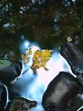 跑在石渣和石头,在水平面的反射的小河被弄脏的蓝色波浪。 库存图片