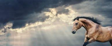 跑在美丽的黑暗的与打破云彩和雨,横幅的太阳的光芒的风暴多云天空的海湾马 图库摄影