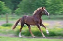 跑在草甸的马 库存照片