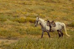 跑在草甸的马 免版税库存照片
