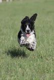 跑在草耳朵飞行的狗 免版税库存照片