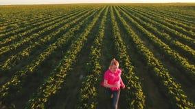 跑在行中的草莓领域的愉快的无忧无虑的女孩与灌木 股票录像