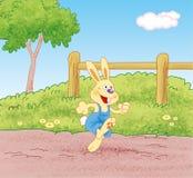 跑在道路的兔子 库存照片