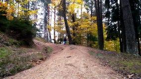 跑在道路的小男孩入森林 股票录像