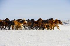 跑在雪的马 图库摄影