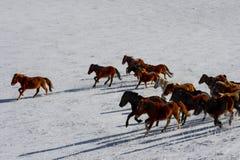 跑在雪的马 免版税库存图片
