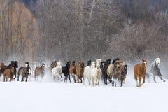 跑在雪的马 免版税库存照片