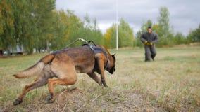 跑往保护衣服的人的一条训练的德国牧羊犬狗 免版税库存照片
