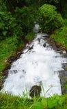 跑掉入绿叶的白色泡沫的水向下流程  库存照片