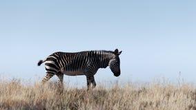 跑掉-野生生物公园 免版税图库摄影