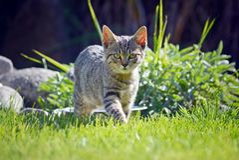 跑摄影师的小猫 库存照片