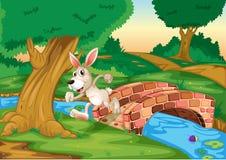 跑横跨桥梁的兔宝宝 免版税库存照片