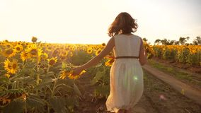 跑横跨领域的小女孩用向日葵在日落 慢动作录影 在领域的女孩赛跑者在日落 股票录像
