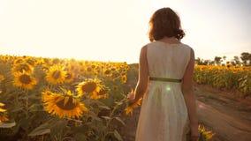 跑横跨领域的小女孩用向日葵在日落 慢动作录影 在领域的女孩赛跑者在日落 股票视频