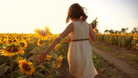 跑横跨领域的小女孩用向日葵在日落 慢动作录影 在领域的女孩赛跑者在生活方式 股票视频