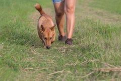 跑步与狗的妇女 库存图片