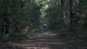 跑步本质上的可爱的少妇通过一个遮荫森林在一个热的夏日改进她的精神健康- 股票录像